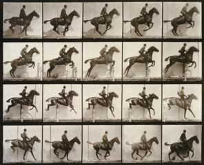 Eadweard Muybridge<br><i>Animal Locomotion, plate 640</i>, 1887<br>Collotype<br>Minneapolis Institute of Arts<br>Gift of Samuel C. Gale, William H. Hinkle, Albert Loring, Charles M. Loring, Charles J. Martin, and Charles Alfred Pillsbury
